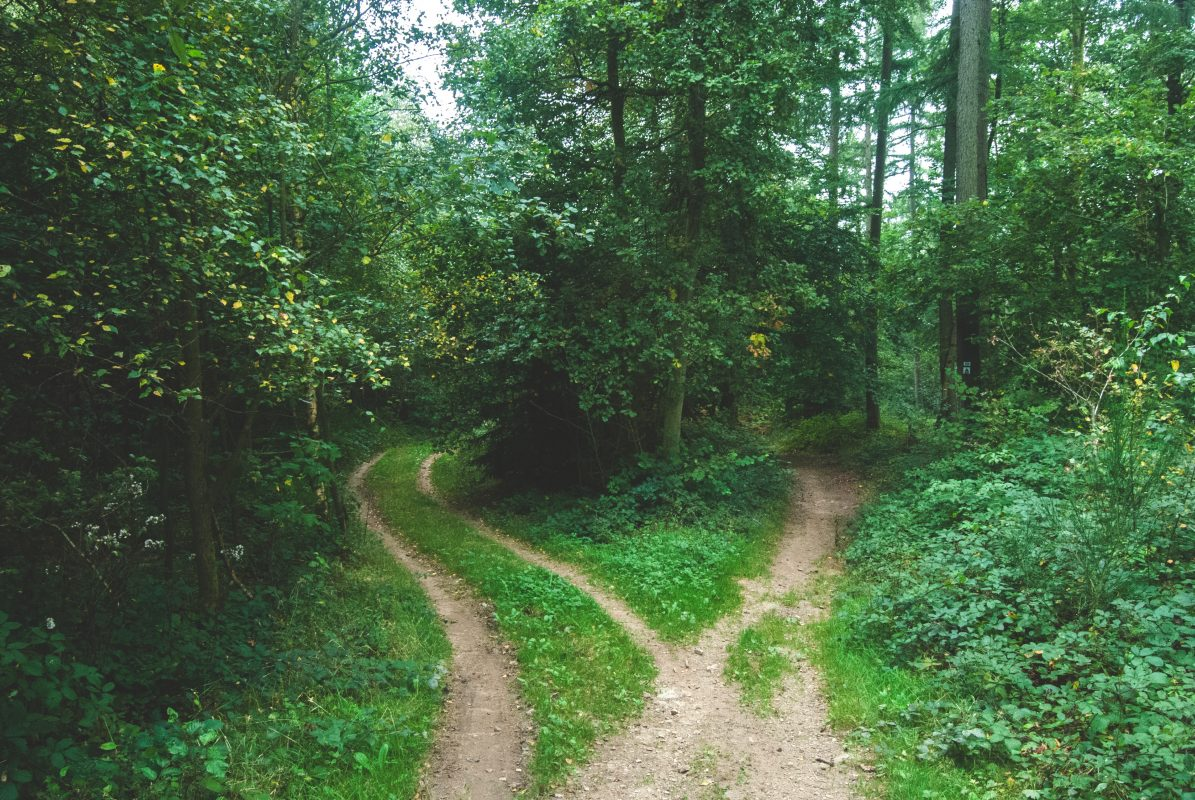 A path divided into 2 paths in a forest