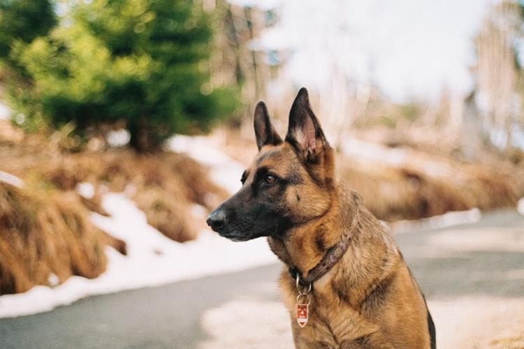 Pic: A dog.
