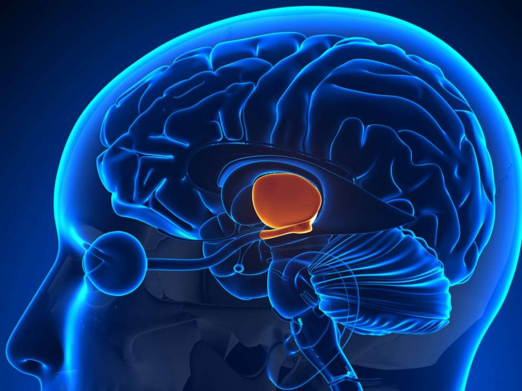 Hypothalamus Gland | READ THIS IF YOU WAKE UP BETWEEN 3 AM & 5 AM |
